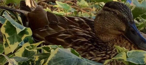 Beaver's House Nest